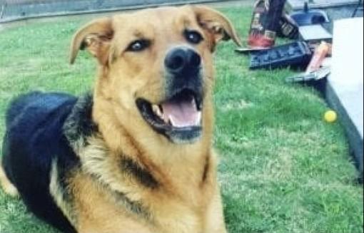 Spacciatore in fuga lancia la droga in un cortile e uccide il cane Margot