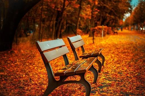 L'autunno: alla fine dell'estate, i nuovi inizi abbondano (più del tappeto di foliage)