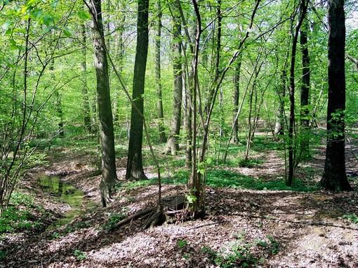 Esibizionista nel bosco, donna importunata durante una passeggiata
