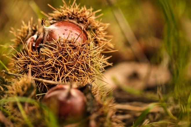 La cucina d'autunno che profuma di camino e nebbia: di scena uva e castagne