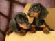 """La nuova iniziativa di Spazio Zero Giovani Gorla Maggiore: una scatola per """"Cani nel Cuore"""""""