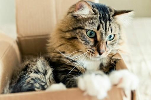 Gatti casalinghi e attività fisica: consigli utili