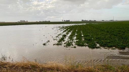 Maltempo, le campagne del Varesotto contano i danni: ortaggi sott'acqua, strade poderali bloccate