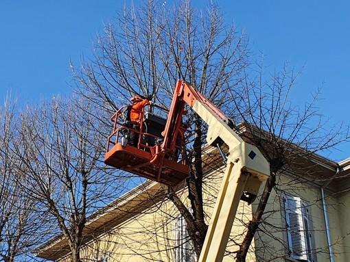 Approvato il regolamento del verde pubblico di Busto. Due nuovi alberi per ogni abbattimento